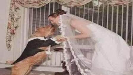 女子不顾世俗眼光与一只狗相爱结婚, 婚后女子的行为让人难以理解