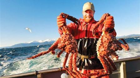 3000块一只的帝王蟹, 挪威人能吃到腻? 看完让吃货羡慕