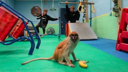 双胞胎的体育馆又来了只小猴子, 场面一度控制不