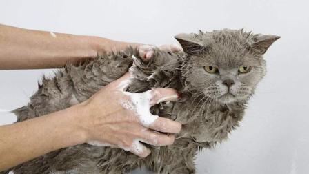 搞笑动物: 小公猫偷看母猫洗澡, 不料正好被发现