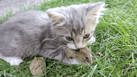小猫抓到一只小老鼠, 小老鼠心理阴影面积很大