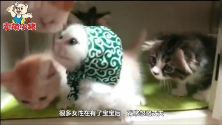猫妈妈正在喂小猫, 猫爸爸当场吃醋, 撒娇求抱抱的样子太萌了