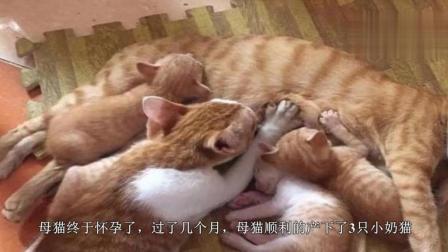 猫妈妈正辛苦的喂小奶猫, 铲屎官凑近一看, 直接忍不住笑喷!