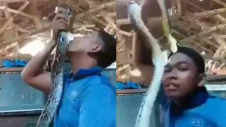 黑人小哥直播耍蛇 反遭大蛇死咬头皮不放