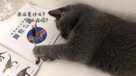 明天就要开学啦! 小猫咪也收拾好行李, 带上猫粮准备上学了!