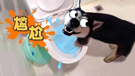 丢人! 宠物最想删除的尴尬视频!