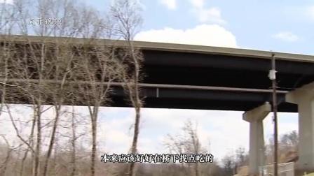 """这怎么上去的! 两山羊""""离奇""""被困15米高桥之上"""