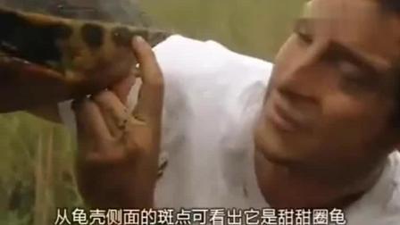 荒野求生: 贝爷抓到了一只乌龟放火上烧烤, 贝爷: 味道像鸡肉
