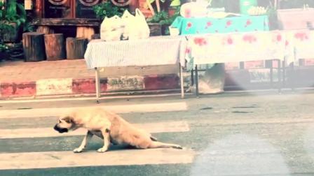 """泰国这只?#39277;?#19981;简单,在街上""""拼演技""""谋生活,还找了几个临演"""