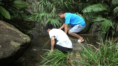 华农兄弟: 农村小伙放笼子装螃蟹, 结果发现还是钓螃蟹比较快