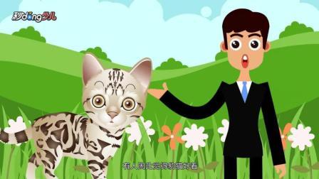 秒懂少儿之动物小科普 能养豹猫吗