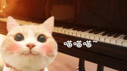 用11种乐器演奏网络神曲《学猫叫》, 钢琴版明显高大上了呢!