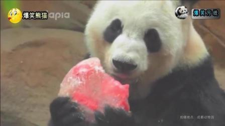 熊猫: 芝芝妈妈最怕的就是芝麻芝士喊妈咪, 一喊就会脑瓜疼