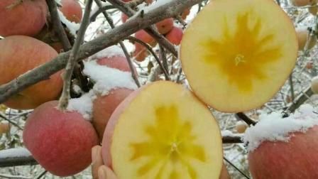 与时间林合作的红旗坡农场所种植的, 阿克苏冰糖心苹果到底有多优秀?