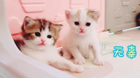 年纪虽小演技高, 这只小猫咪才是宠物界的卖萌杠把子!