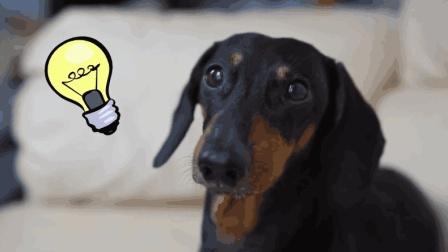 精怪的狗狗, 主人偷吃还栽赃给狗狗, 狗狗也是会报复的哦!