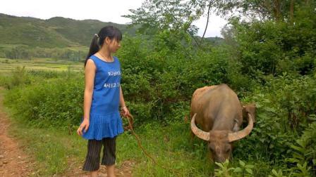 放牛的农村姑娘, 配上这首歌, 好听哭了!