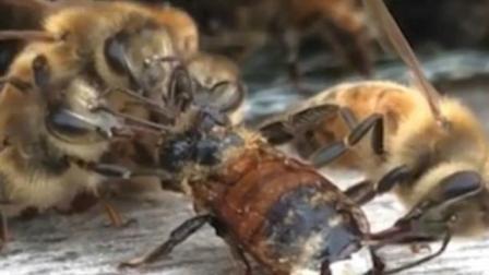 暖心! 工蜂组队帮助落难伙伴清理身体