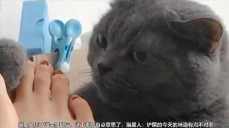 猫星人舔了铲屎的脚后, 感觉今天的味道不对, 这表情是认真的