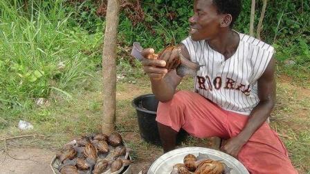 非洲人一年吃掉15000吨蜗牛, 吃到濒危, 真是没谁了!
