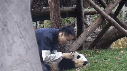 奶爸对熊猫宝宝不断揉搓, 期间还想偷吻熊猫, 真是太过分了