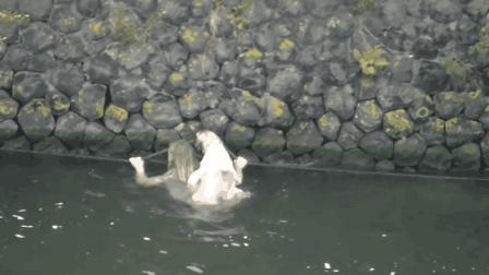 狗狗落水挣扎, 美女跳河背负它前行, 人美心更美!