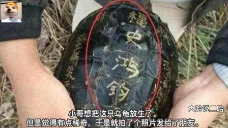 抓到一只乌龟, 看到龟背上的字正打算放生, 接个电话后改变主意了
