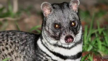 地球上被科学家认为已经灭绝的六种动物, 有一种