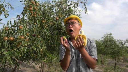 香蕉和冬枣一块吃会产生怪味, 那和其他的枣呢? 小伙这表情让人怀疑人生