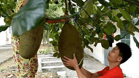 树上砍下50多斤熟菠萝蜜, 农村小伙徒手就接住了, 你敢这样接吗?