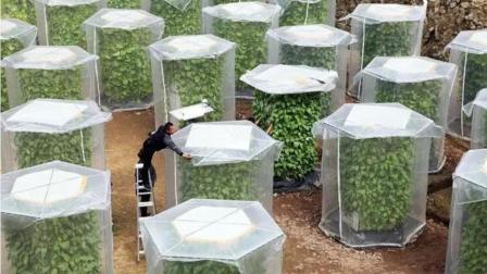 """中国农民发明""""空气种菜"""", 收成翻了6倍, 自家后院也能种!"""