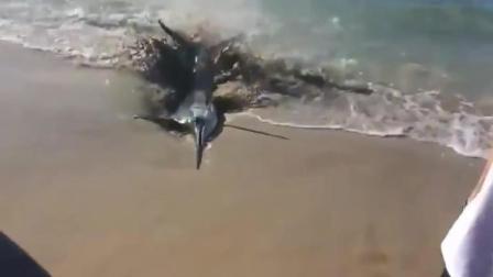 海边出现一只鱼, 监控拍下离奇的画面