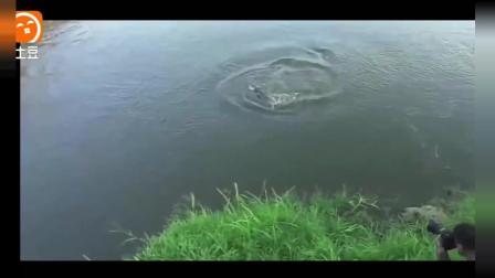 民间牛人挑战野生鳄鱼精彩一瞬间, 相机正好记录