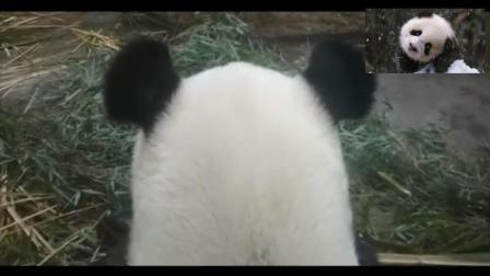 我能在熊猫馆待一天