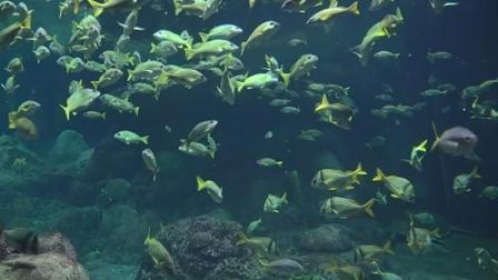 圣地亚哥海洋世界,不能错过的水族馆哦,超漂亮的!