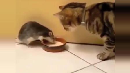 搞笑动物集锦1