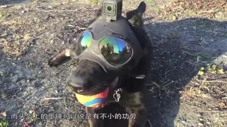 美国发明警犬头盔, 可配戴手枪和摄像头