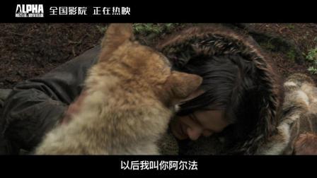"""《阿尔法: 狼伴归途》最""""美""""电影众星齐赞"""