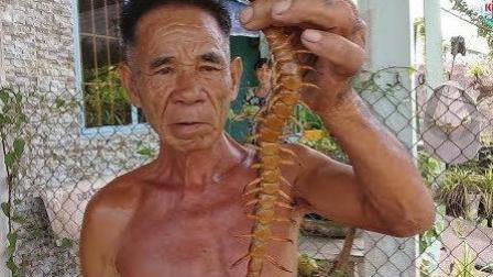 这种蜈蚣看着让人头皮发麻! 老头直接用手抓, 网