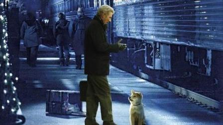 豆瓣9.3分, 《忠犬八公的故事》美国版, 吸引人的并不源于故事本身, 而是因为狗狗的忠贞……