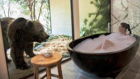 全球最危险的酒店: 洗澡被狗熊围观, 鲨鱼陪你睡觉, 你敢住吗?