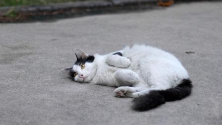 猫咪为什么会怕黄瓜? 赶紧拿你家的猫咪试试, 猫