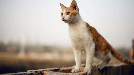 猫咪空翻动作堪比跳水运动员, 几层楼高跳下摔不