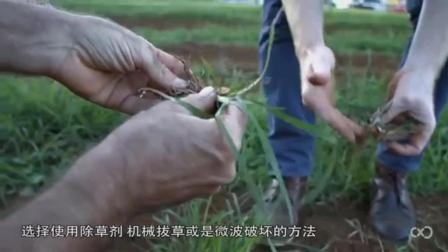 美国发明拔草机器人, 可顶10工人, 现在种地都会