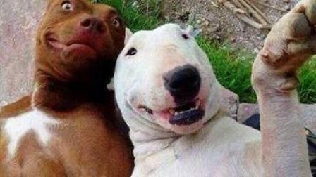 动物界的搞笑大神。这只狗娃子你挖这个洞是打