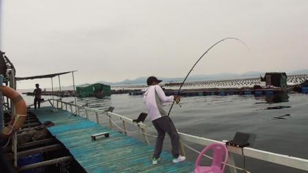 海钓大鱼, 一拉很沉, 拉上来一看却是这鱼, 真是够了