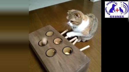 """""""可爱的猫咪""""_猫有趣_ _ _最搞笑的猫电影38"""