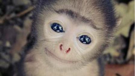 前方高能! 牛人给猴子变魔术, 不料猴子笑点太密