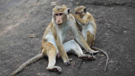 小姑娘与这猴子已经走红网络, 圈粉无数~这对萌