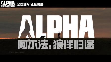 《阿尔法: 狼伴归途》发父母爱正片片段 最佳亲子电影金句催泪